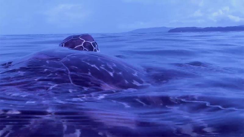 海ガメの約束